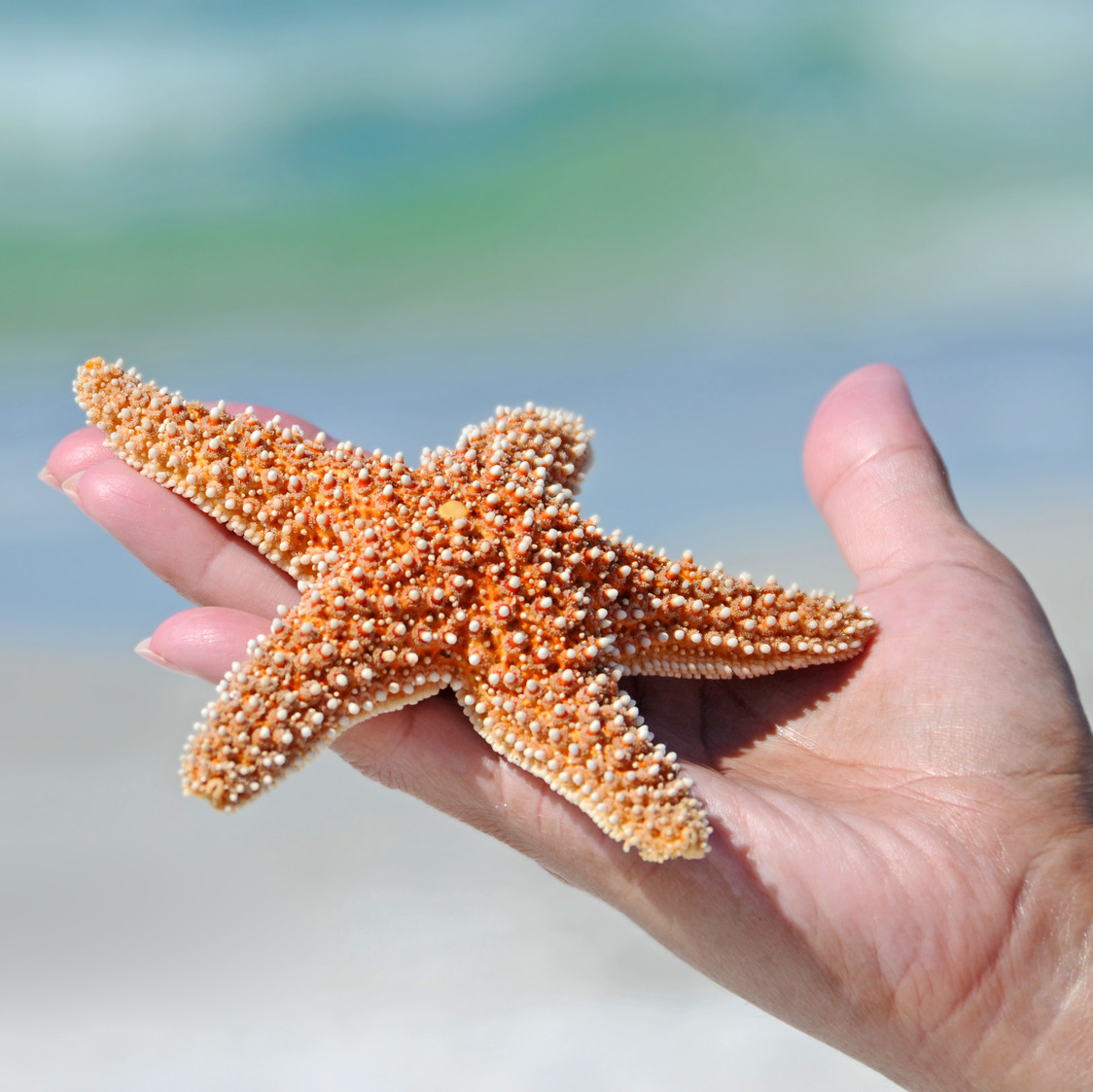 Woman's Hand Holding a Starfish against Ocean in the Background